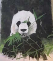 Panda by WildCritterz
