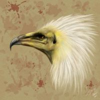 Egyptian Vulture by SurgeonWolf