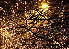 Lights Full Of Tree by 57RIK3R