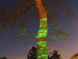 laser tree by dproberts