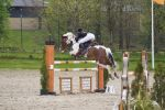 Pinto Horse - Show Jumping stock - 12.15 by MagicLecktra