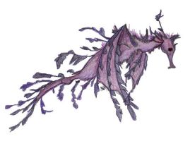 Leafy Sea Dragon by Lavie-Nenharma