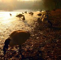 Where the Geese Lay by idlekids