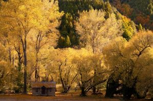 Autumn in Arrowtown by chrisgin