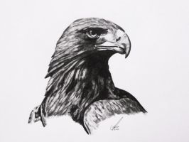 Golden Eagle by salt25