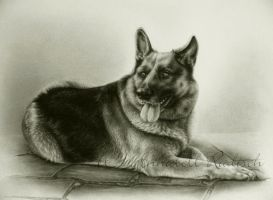 commission shepherd dog by Isisnofret
