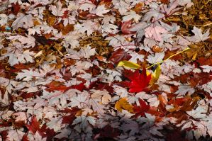 Leaves by Angel-Platypus-Photo
