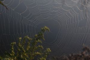 The Web by WildSwamp