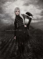 Black  Poetry by Aeternum-designs