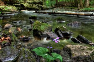 Flower by Stream by Bramsey89