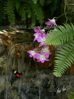Butterfly Waterfall by SteelCowboy
