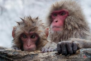 Baby snow monkey by StarRose17