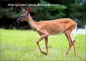 Deer 6 by okbrightstar-stock
