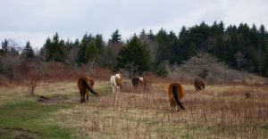 Wild Ponies Were Born To Run by fe208