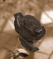 Petrified Rose by Hellstorm1223
