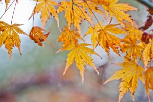 Autumn leaves 8 by TheEtherealSoul