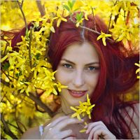Forsythia by Daywish