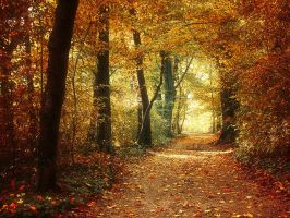 Autumn Walk pt.XXI. by realityDream