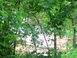 down by the muddy river II by paramorefan1827