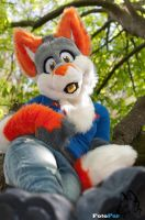 Chilling in a Tree by FotoFurNL