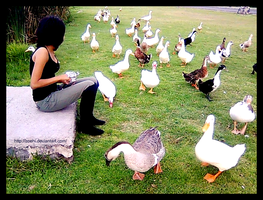 The girl and the ducks by Zoehi