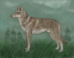 Saarloos Wolfhond by Spigu
