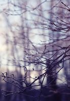 Frosty trees in the morning. 2 by Alhor-Ern