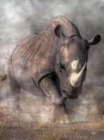 Angry Rhino by deskridge