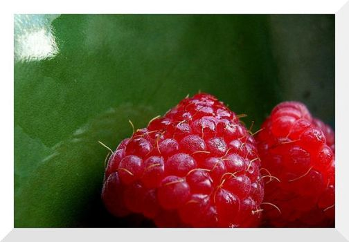 - Raspberry - by sun-in-the-pot