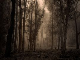 ::Misty Forest:: by OmegaSunset