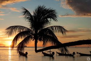 palm sunset by cavalars
