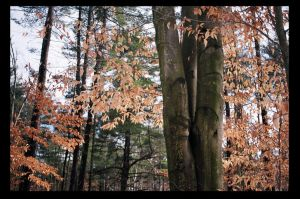 Tree Accented With Dead Leaves by NightShades