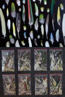assorted parrot feathers SOLD by Featheroes