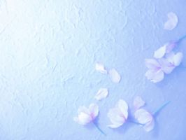blossoms on a handmade paper 2 by Amalus