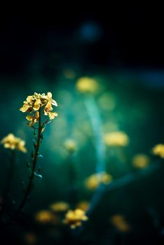Generic Flower Shot No. 1894 by Andross01