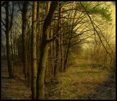 Forest by bergol
