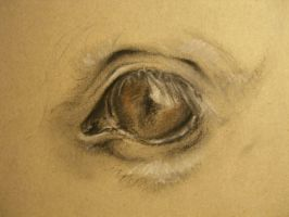 Eye of a horse by EminemsArtist