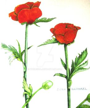 Two red roses by whimsica