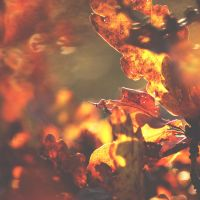 Autumn collection Nr. 21 by 1Mathew7