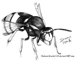 Wasp by MelanieDraidnt24