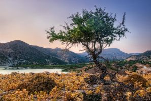 Tree at Sunset by Pipera