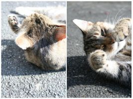 Cats by halogenlampe
