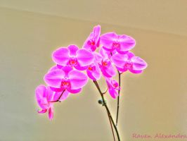 Surreal HDR Flowers by RavenA938