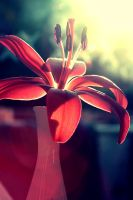 Lady in red. by incredi