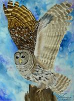 Barred Owl by Woodswallow