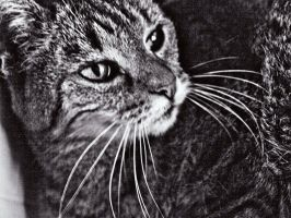 my cat in black and white by Zyuza