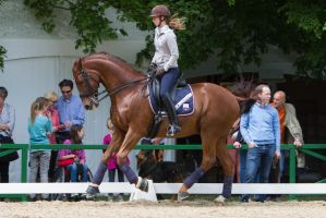 Chestnut WB Canter Warmup by LuDa-Stock