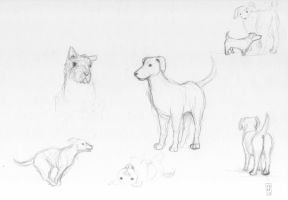 Sketch-a-day 03-08-13: Dogs by ThroughMyThoughts