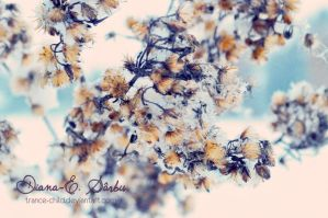 Faded explosion by DianaES