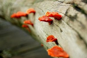 mushrooms by blacksheepwall